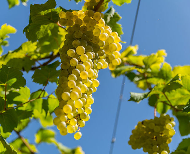 vino-albana1