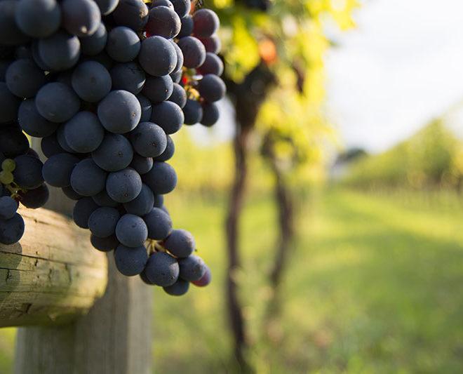 vino-sangiovese1